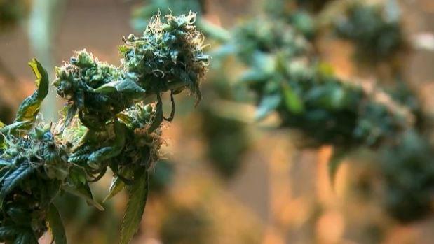 Second Recreational Marijuana Shop Open in Berkshires