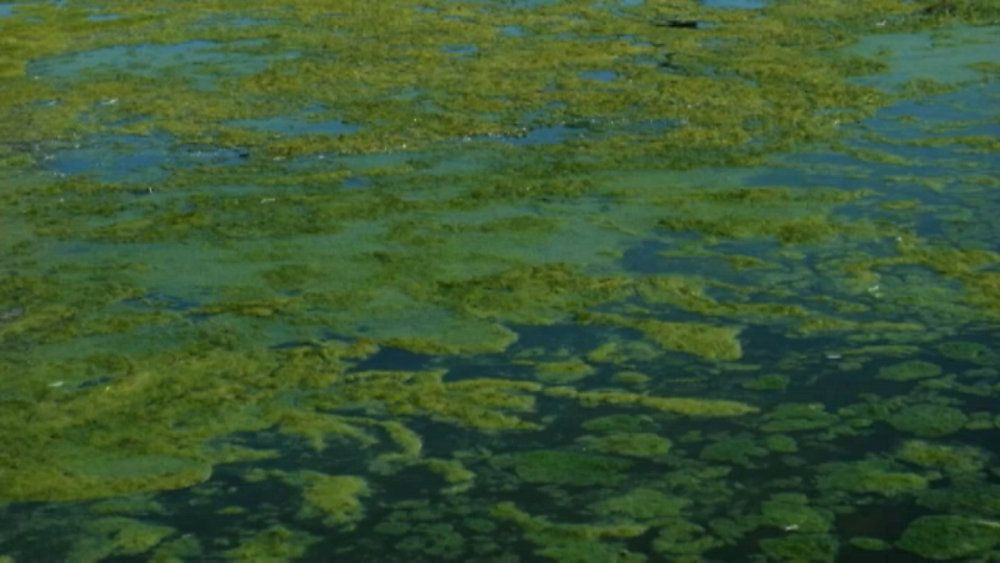How to Report an Algae Bloom in Florida