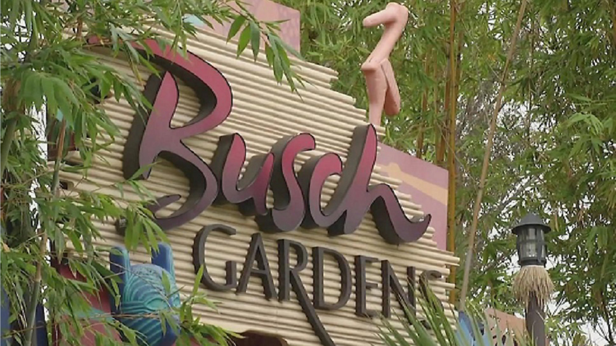What S Coming To Busch Gardens Tampa Bay In 2020
