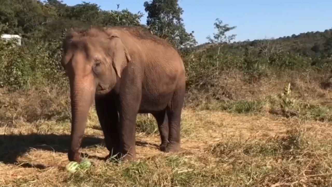 Judges Rules 'Happy the Elephant' Not Entitled to Human Rights