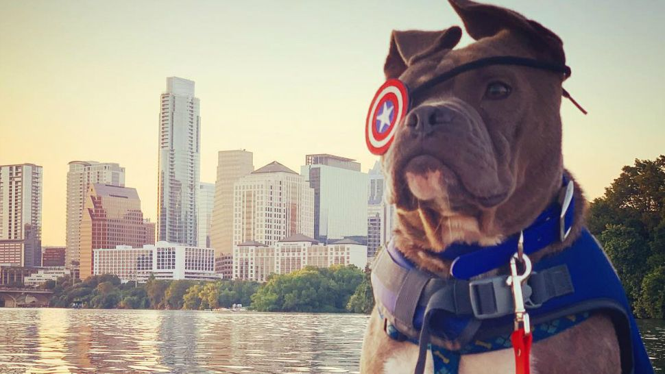 "Following Battle with Injury, ""Captain America"" Looking for Forever Home"