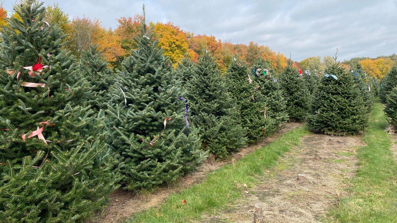 Chicopee Christmas Tree Farm Prepares For Holiday Season