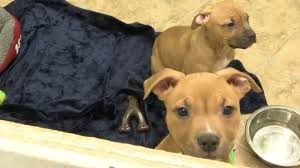 CNY SPCA Seeing Fewer Adoptions Being Returned