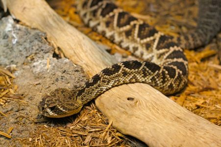 Most common snakes in NC