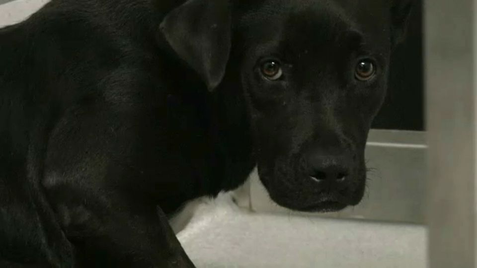 SPCA Serving Erie County takes in dogs from South Carolina