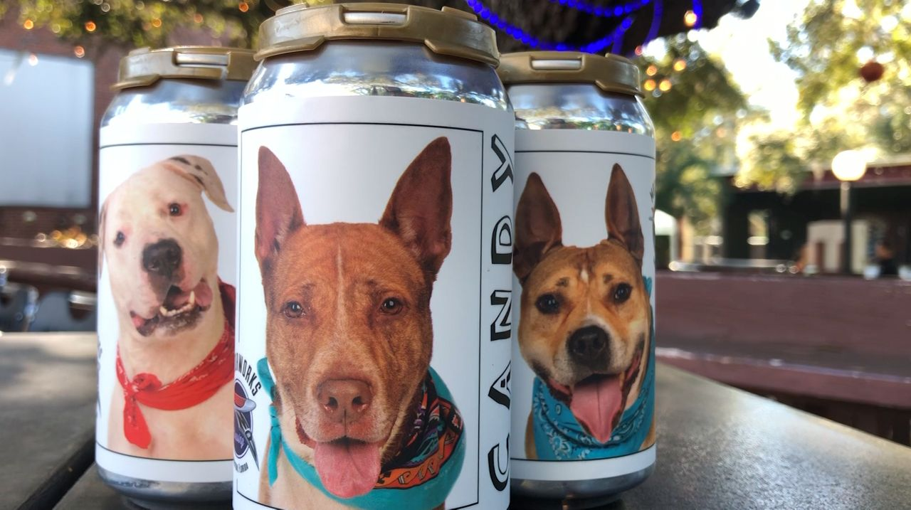 Motorworks Brewing in Bradenton collaborated with Manatee County Animal Services to showcase dogs currently in the shelter on their beer cans. (Gabrielle Arzola/Spectrum Bay News 9)