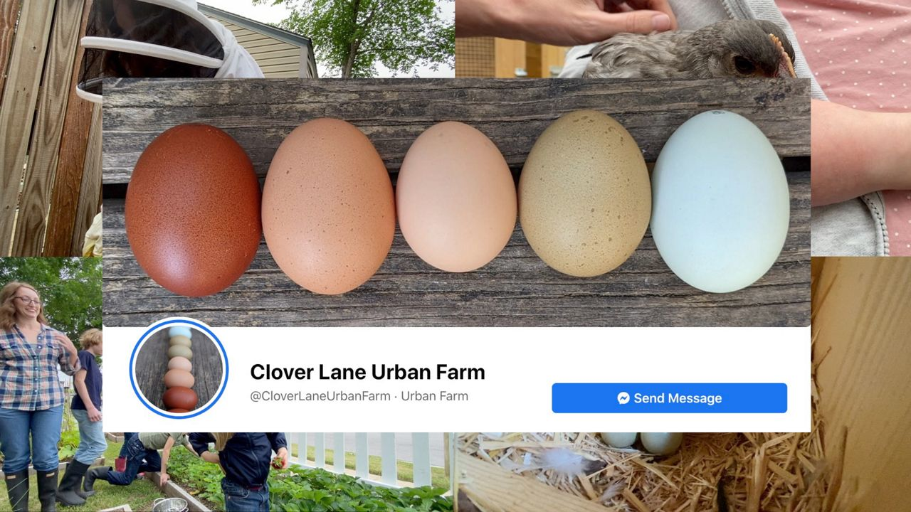 Pictured is the wallpaper image of Clover Lane Uban Farm's Facebook page. (Courtesy: Tara Coughey)