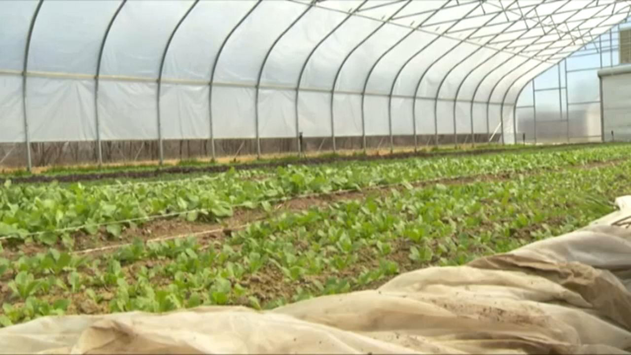2019 Farm Act Aims to Help Reinvigorate Agriculture Industry