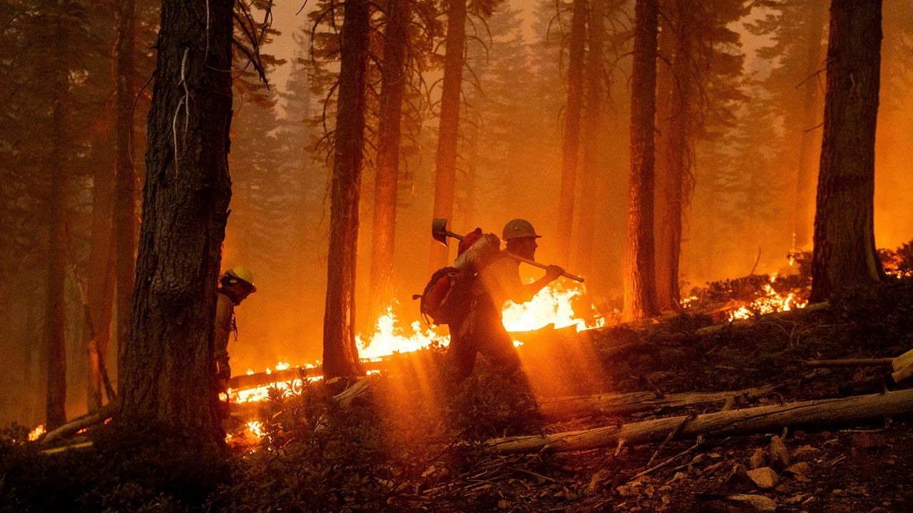 Forest Management Climate Change California Wildfires - Spectrum News NY1