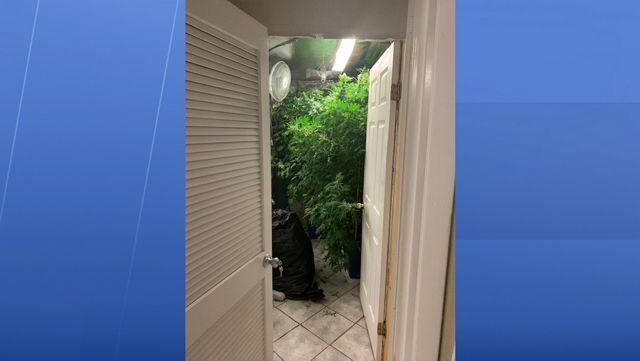 Deputies: $1 Million Of Marijuana Found At Valrico Grow House