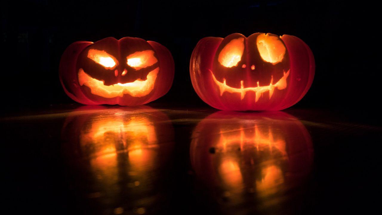 Halloween Events For Kids Npr Fl 2020 Tampa Bay Halloween Events