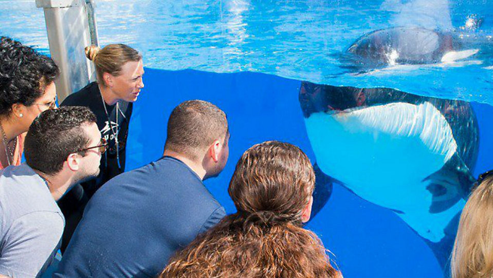 SeaWorld Entertainment filed permits for a new water attraction at one of its parks. (SeaWorld)