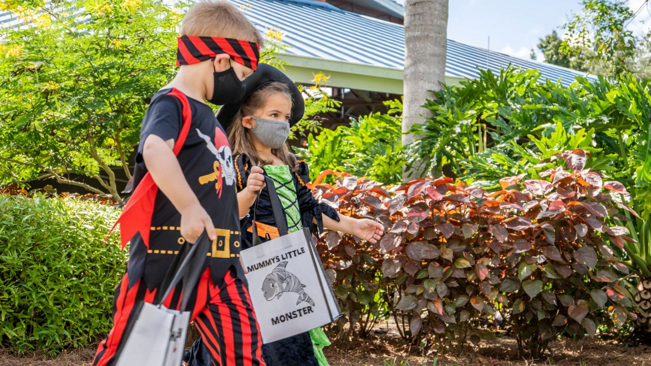 Halloween Spooktacular 2020 Ravine Gardens SeaWorld Adds Maze, Cookie Decorating to Halloween Event