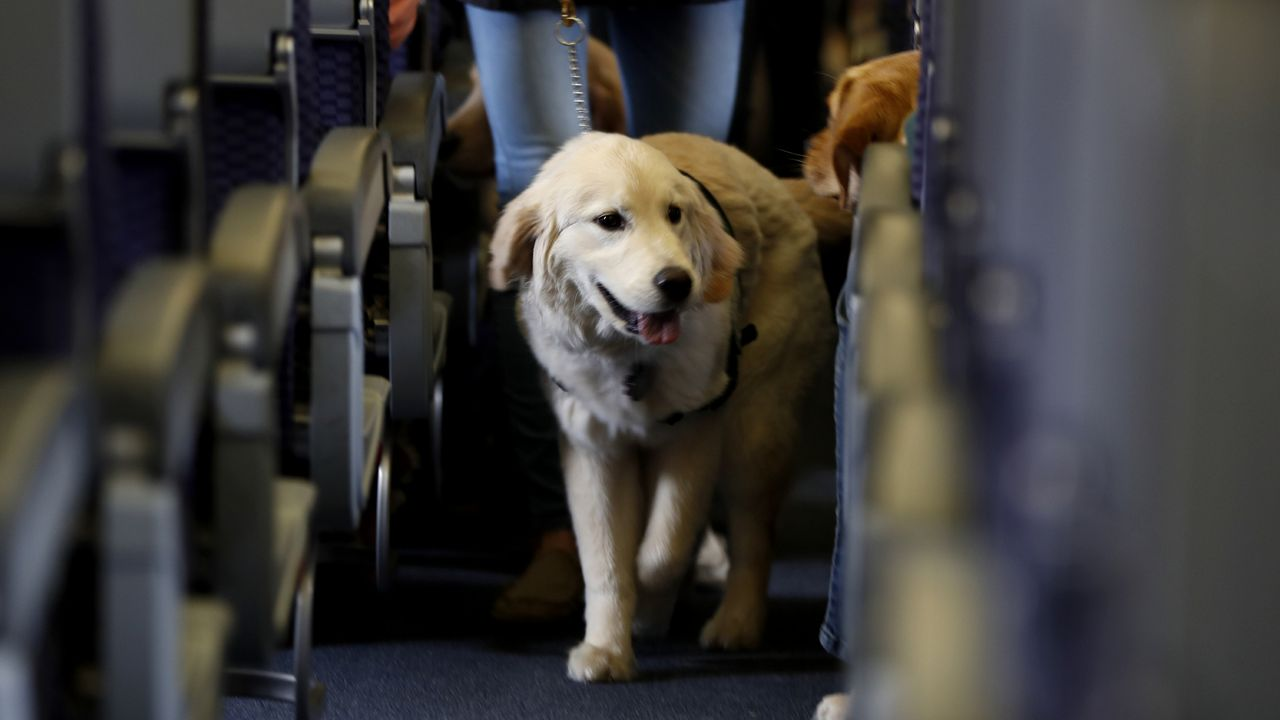 New DOT Rules Crack Down on Emotional Support Animals on Flights
