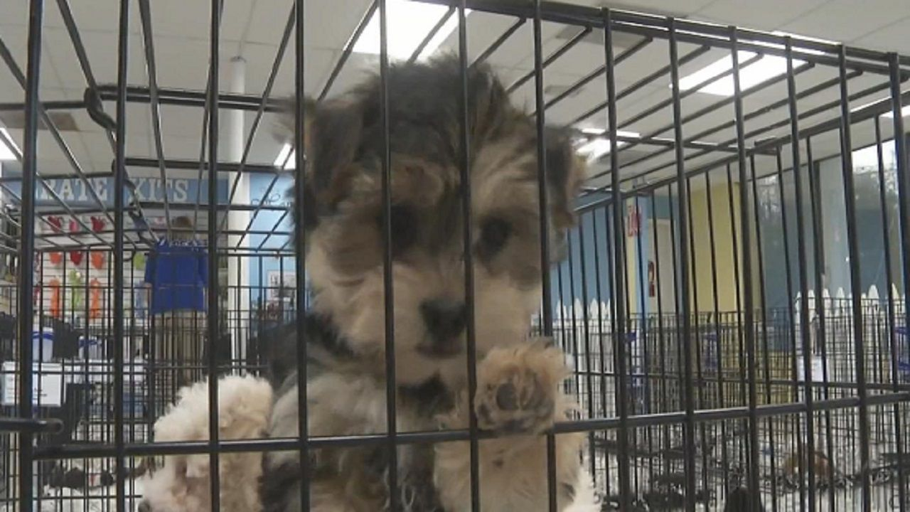 The End of Traditional Pet Sales in Hillsborough County?