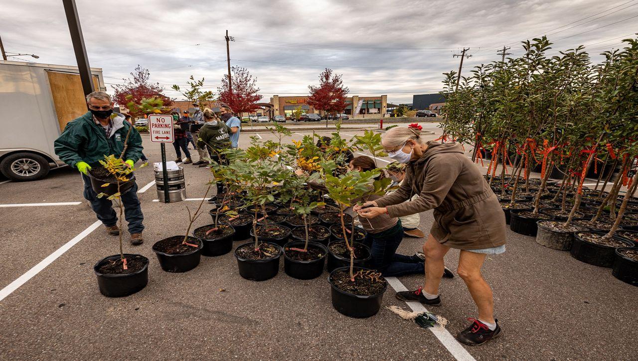 Tree pickup during a ReLeaf event hosted by Cincinnati Parks (Provided: Cincinnati Parks)