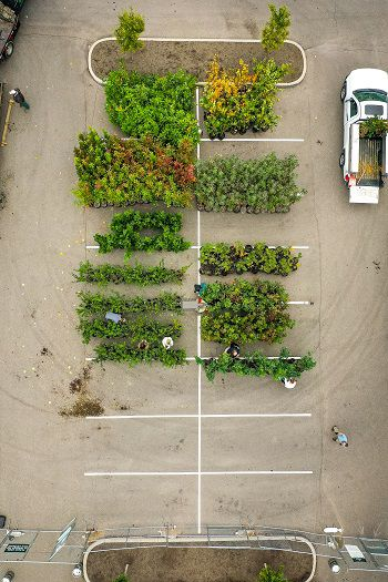An overhead shot of trees at a ReLeaf pickup event (Provided: Cincinnati Parks)