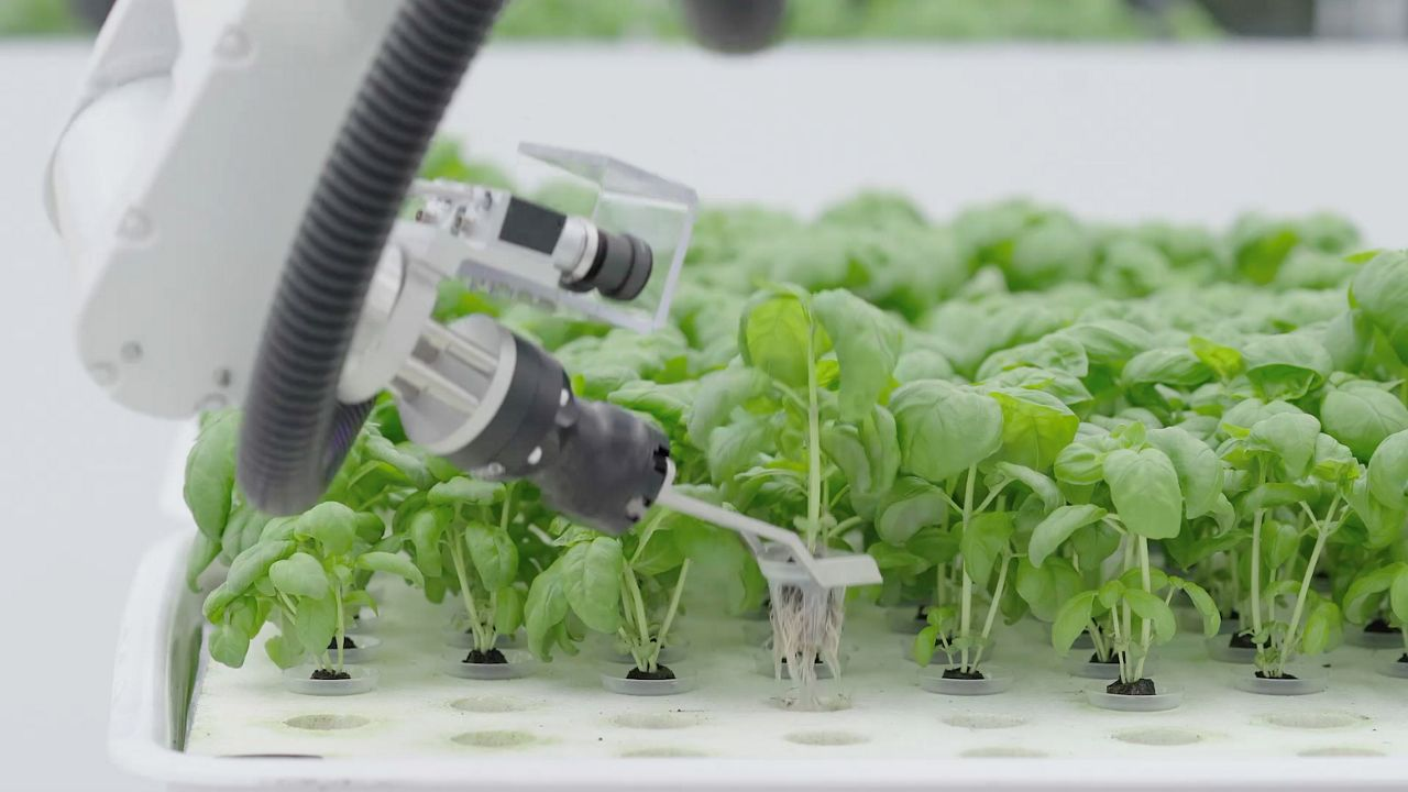 Food is grown with the aid of robotics in this undated image. (Source: Iron Ox)