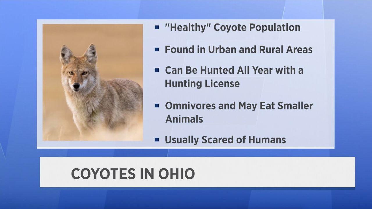 Coyotes Seen Throughout Ohio