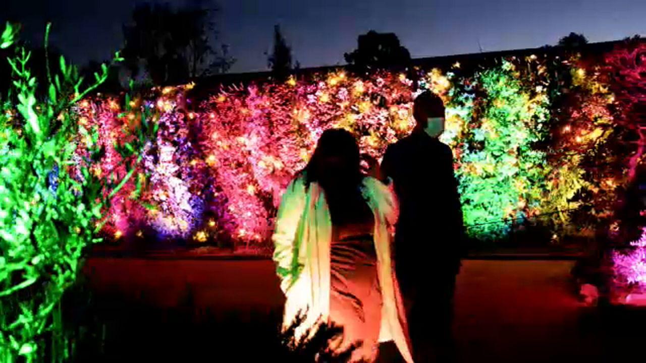 South Coast Botanic Garden Presents Glow