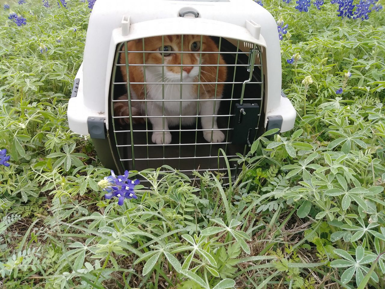Cat in crate in wildflowers.