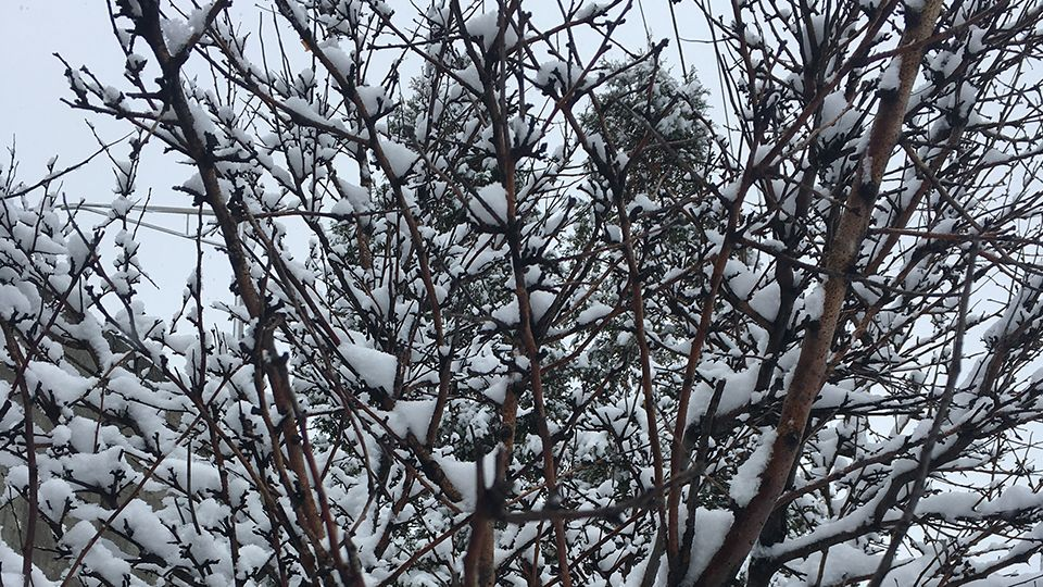Snow, Sleet and Rain Expected Today