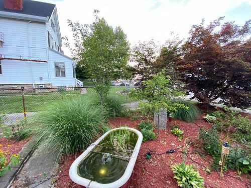 A photo of a yard that had a ReLeaf tree planted (Provided: Cincinnati Parks)