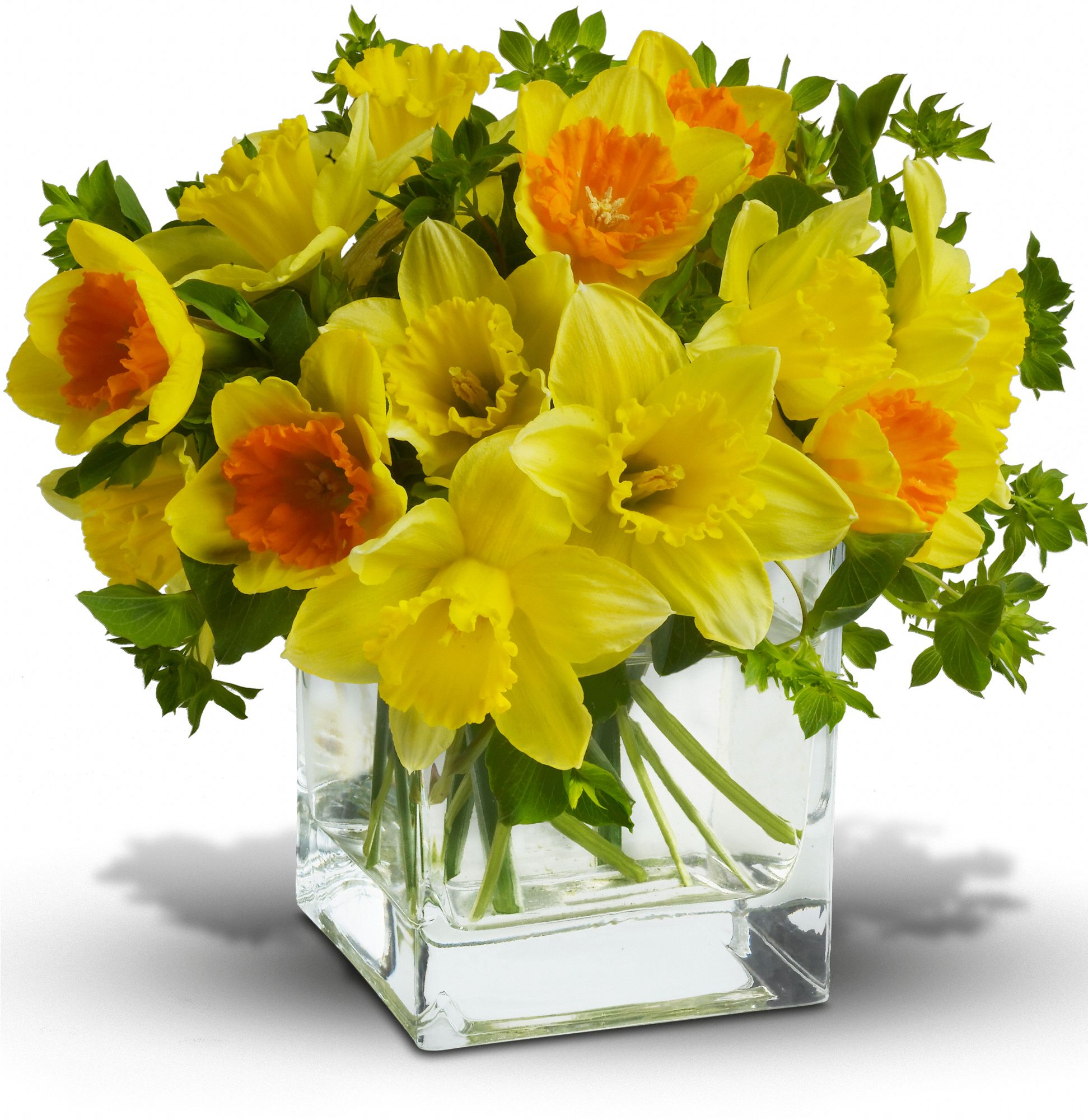 Shop for Narcissus / Daffodils