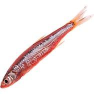Fish Attractant + Bait
