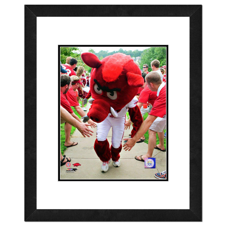 Photo File University of Arkansas 8' x 10' Mascot Photo