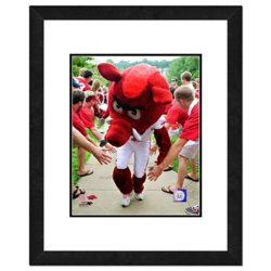 "Photo File University of Arkansas 8"" x 10"" Mascot Photo"