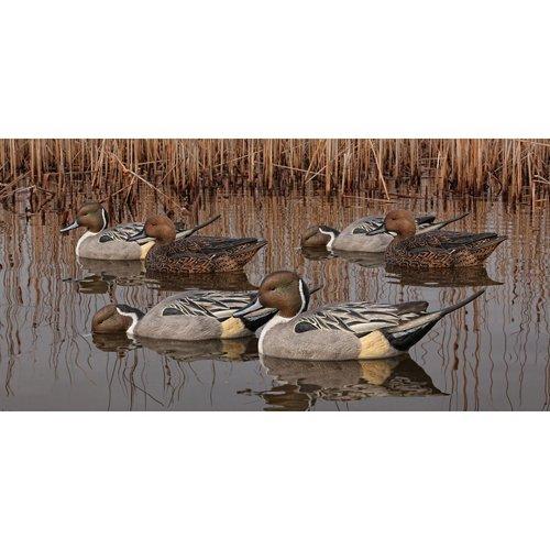 Avian-X Topflight Pintail Duck Decoys 6-Pack