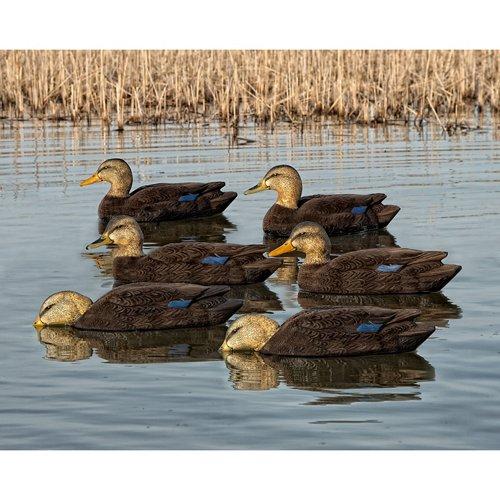 Avian-X Topflight Black Duck Decoys 6-Pack