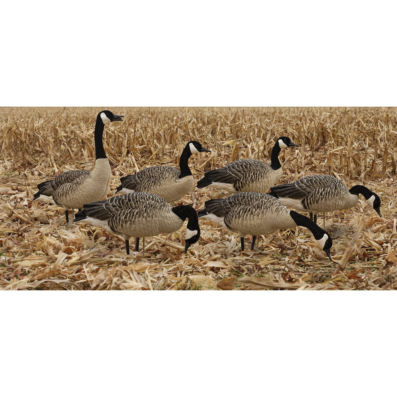 Avian-X AXP Painted Honkers Fusion Goose Decoys 6-Pack - view number 3
