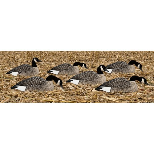 Avian-X Painted Honker Shell Geese Decoys 6-Pack