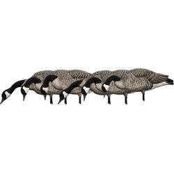 AXF Honkers Feeder Decoys 6-Pack