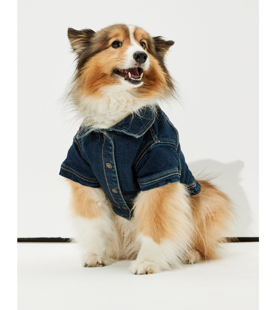 American Eagle ABO Doggy Denim Jacket