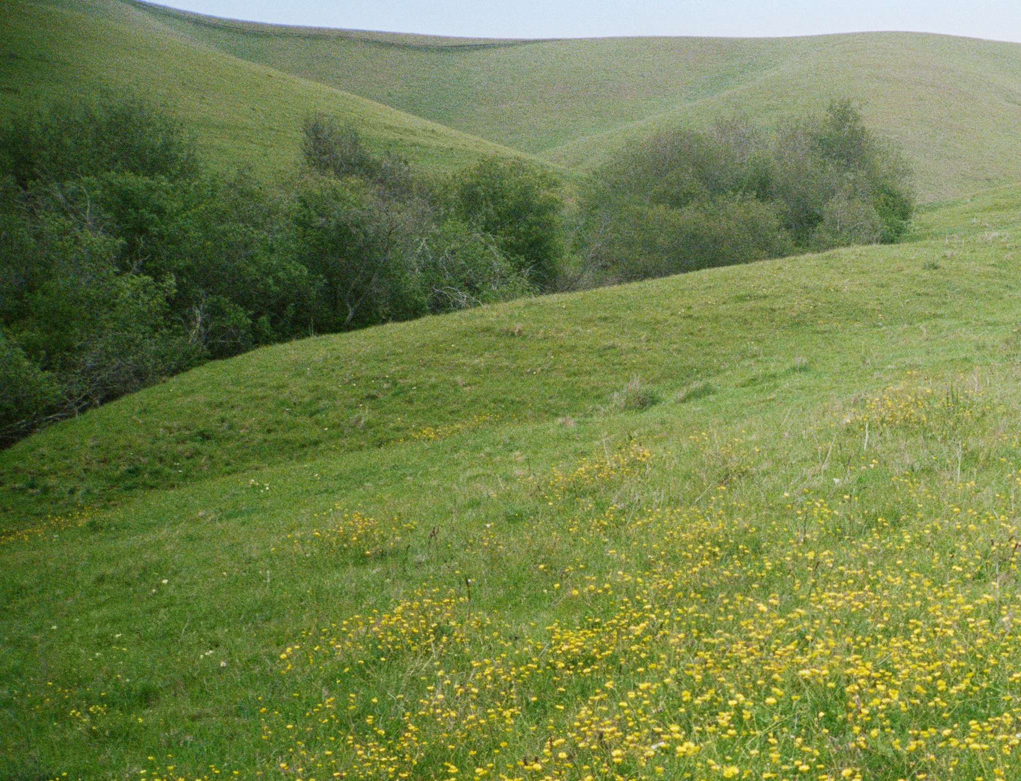Meadow in the hills