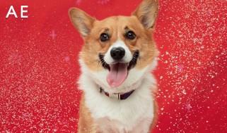 AE Holiday Dog Gift Card
