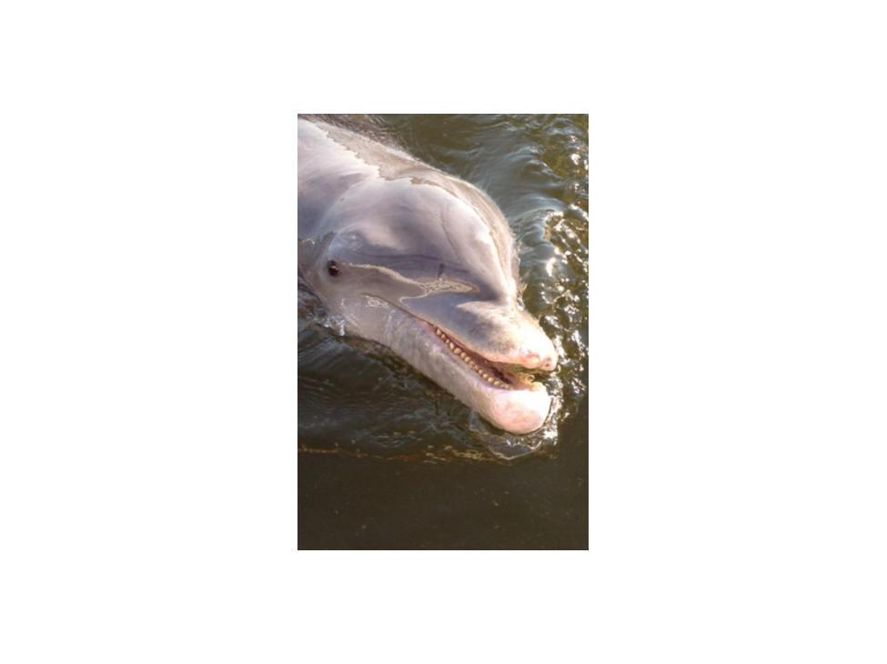 102415_Dolphin