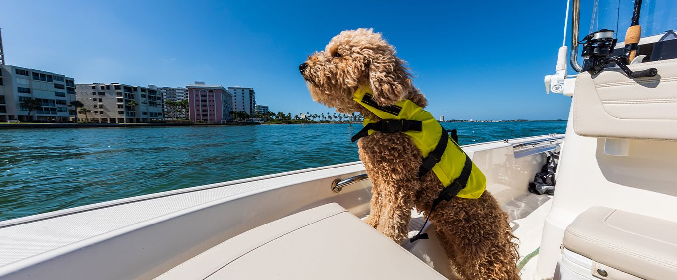 BW-Navigator-Boating-Pets-1366x565