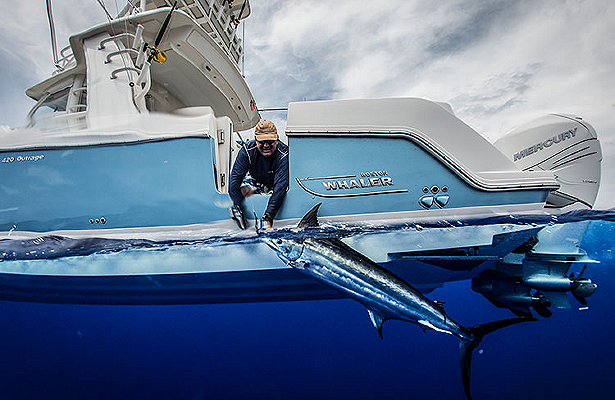 Boston-Whaler-Boat-Type-Fishing