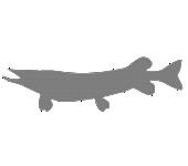 Lowe ProStaffProfile Pike 10 06 21