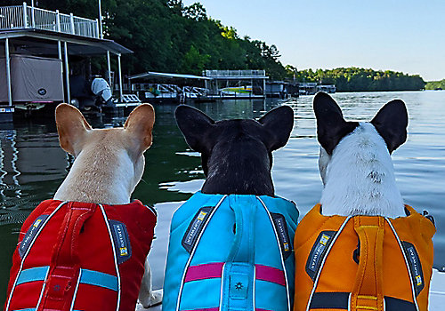 Three Dogs in Life Jackets