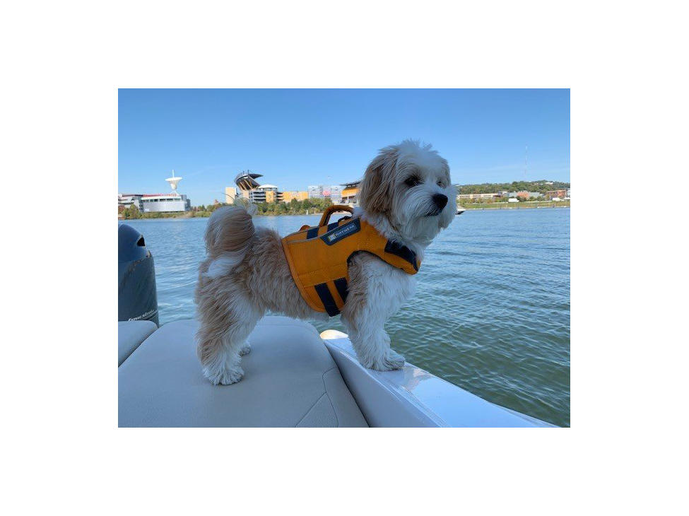 boat dog 2