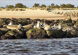 newburyport-sunning-seals-newburyport