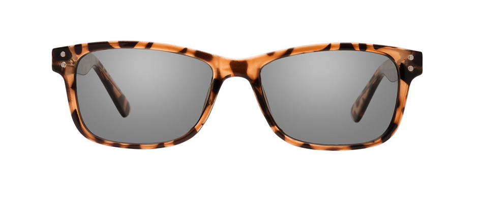 product image of Clearly Basics Lloydminster Tortoise