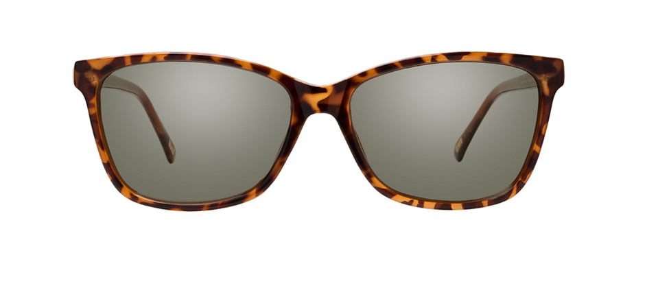 product image of Main And Central Crown Heights-54 Tortoise