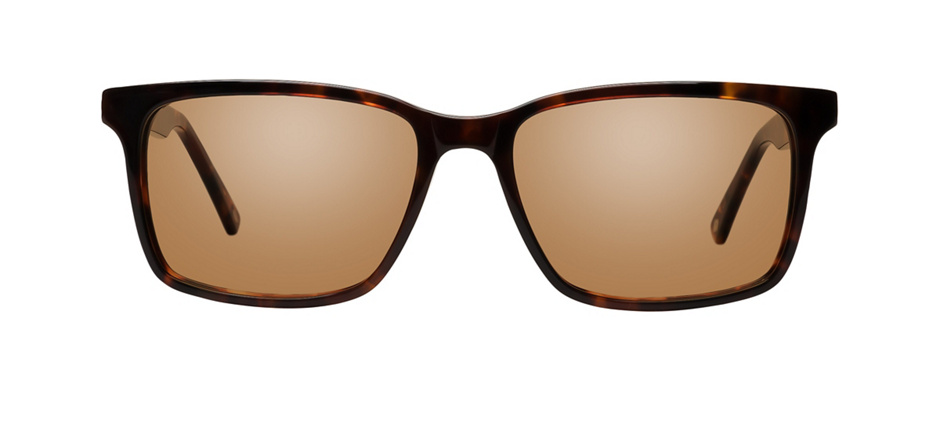 product image of Main And Central Rockhampton-53 Tortoise