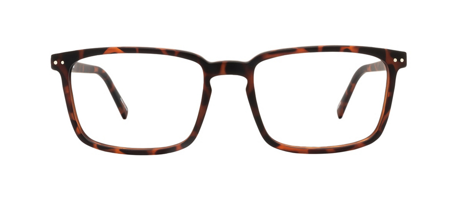 product image of Reincarnate Curlew-55 Tortoise